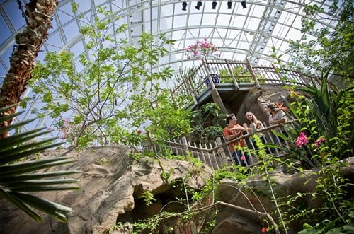 Crystal Bridge Interior, Myriad Botanical Gardens